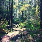 Toorongo State Forest by Roz McQuillan