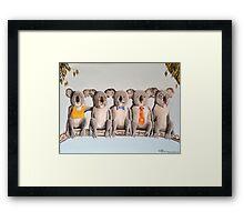The Five Koalas Framed Print
