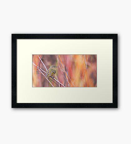 Ruby-crowned Kinglet Framed Print