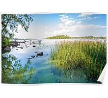 Reeds and Dnieper River Poster