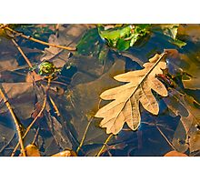 Oak Leaves in a Puddle Photographic Print