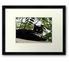 Tuxedo Cat Of Jerome Arizona Framed Print