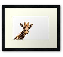 Giraffe head isolated on white background Framed Print