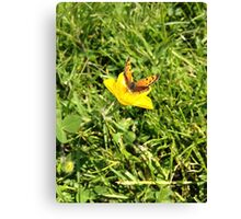 Butterfly Rests on Buttercup – Photo Ver. Canvas Print