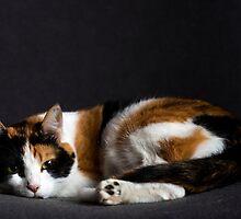 Pussy cat by Srdjan Petrovic