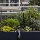 victory garden by oliversutton
