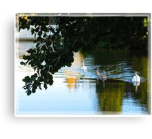 Swans on the River Canvas Print