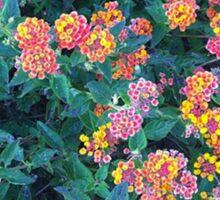 Flower Garden Sticker