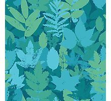 Turquoise leaves  Photographic Print