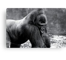 Are you looking at me? Canvas Print
