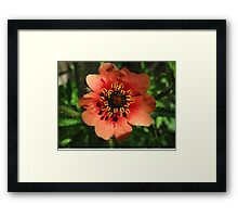 Orange Flower – Macro Close-Up Framed Print