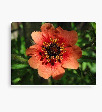 Orange Flower – Macro Close-Up Canvas Print