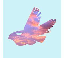Pidgeot Sky Silhouette Photographic Print