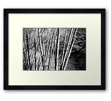 outside - contrast of nature Framed Print