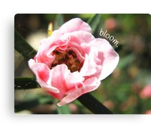 """Bloom."" Pink Flower – Macro Close-Up Canvas Print"
