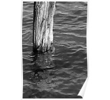 Single Old Piling 4 BW Poster