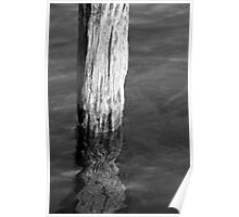 Single Old Piling 5 BW Poster