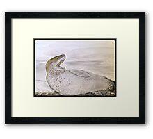 LEOPARD SEAL Framed Print