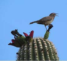 Chirping Cactus Wren on Top of a Cactus by Ingasi