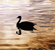 Golden Goose by David Lamb