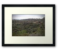 Feather River Canyon - pine forest Framed Print