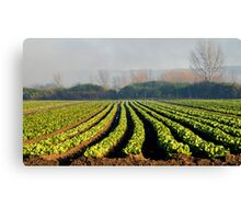 Australian Soil Lettuce Rejoice Canvas Print