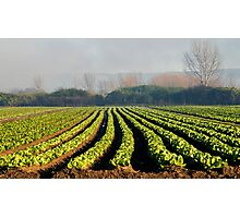 Australian Soil Lettuce Rejoice Photographic Print