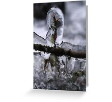 Icy branch - 2016 Greeting Card