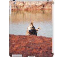 Dingo bath iPad Case/Skin