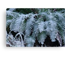 New year frosted ferns Canvas Print