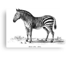 Zebra - Super Retro Canvas Print