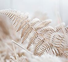 Frosted Fronds III by ghd-photography