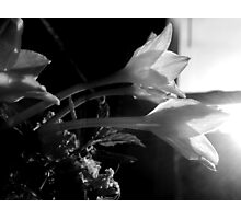 PRAIRIE LILIES BY THE WINDOW Photographic Print