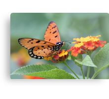 The Tawny Coster Butterfly  Metal Print
