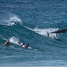 Dolphins surfing at Monavale NSW Australia by Doug Cliff