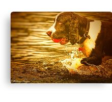 Dog On A Mission Canvas Print