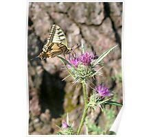 Scarce Swallowtail Butterfly and Thistle Poster