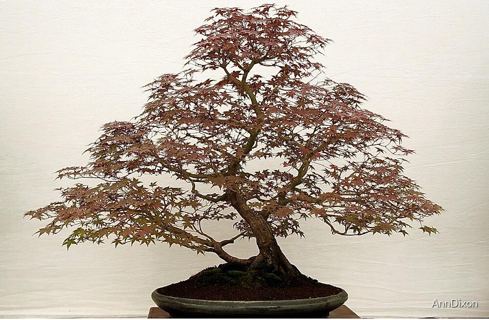 Bonsai Tree by AnnDixon