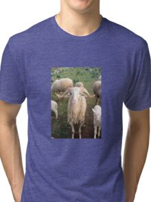 A Flock Of Sheep In A Rural Setting Tri-blend T-Shirt