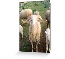 A Flock Of Sheep In A Rural Setting Greeting Card