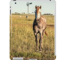 Horse in the countryside  iPad Case/Skin
