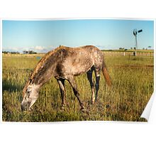 Horse in the countryside  Poster