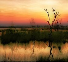 Sunset in the Wetland Fochteloerveen by Jo Nijenhuis