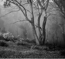 Mt Donna Buang  2 by Christine  Wilson Photography