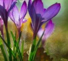 Morning impression with crocuses Sticker