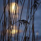 Sunny January day on river by Bluesrose