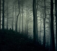 Foggy dark forest with a black slope by aquapixel