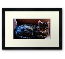 Take A Nap And Get Over It  Framed Print