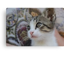 Close up photograph of a cute cat Canvas Print