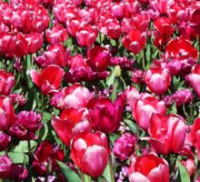 Garden of Tulips Sticker